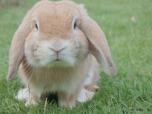 bunny-1149060_960_720